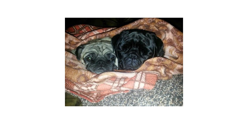 Mops, Nelly i Lotty, 4 i 9 godina